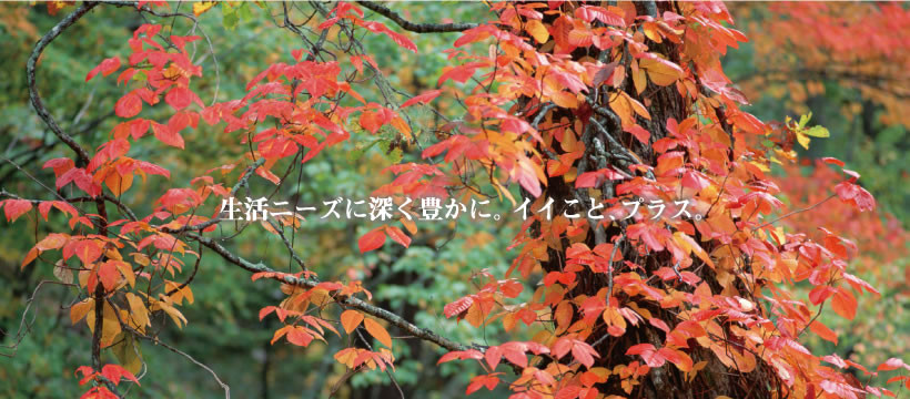 10head_img01